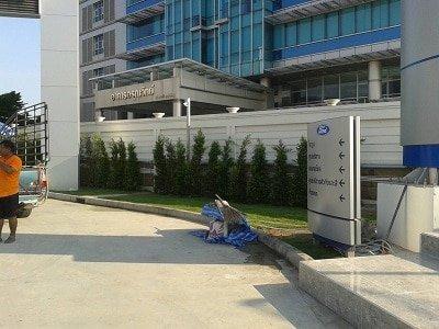 ไทรเกาหลี, ขายต้นไทรเกาหลี